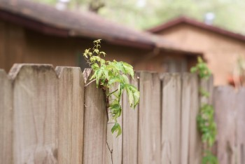 Austin Fence Builders